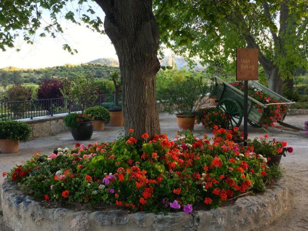 Mallorca, Spain flowers