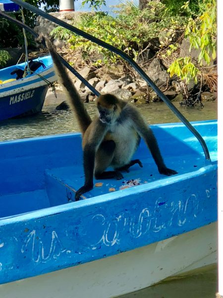 Monkey time in Nicaragua