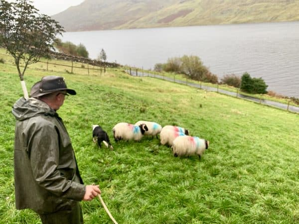 Memorable day with a sheepherder